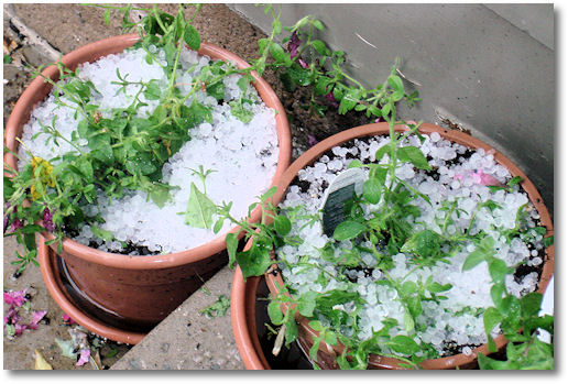 Hail in Flower Pots