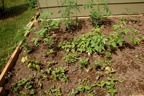 Raised Garden - First Section Planted