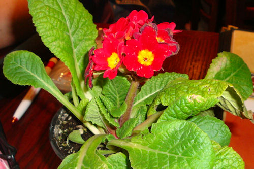 Valley AEYC Dinner - Flower