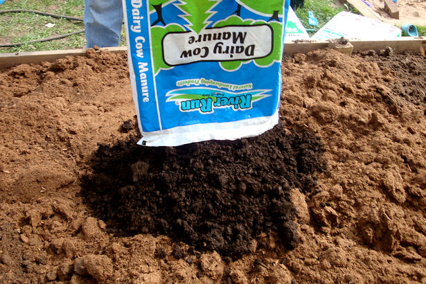 Square Foot Gardening Preparation - Manure