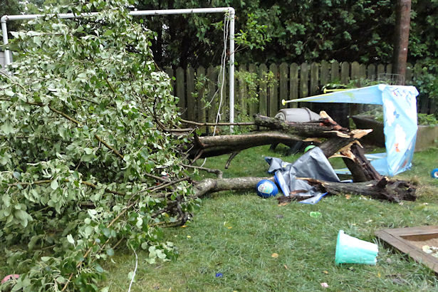 Storm - Pear Tree Down