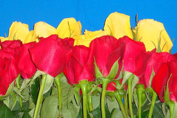 Wedding Flowers - Roses up Close