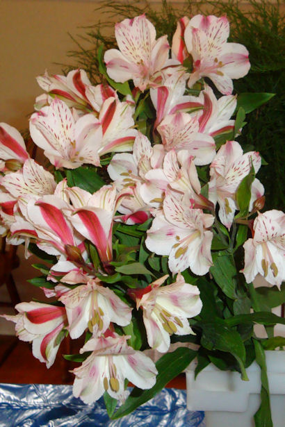 Wedding Flowers - Alstroemeria