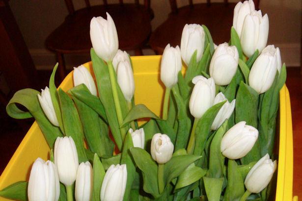 Wedding Flowers - White Tulips