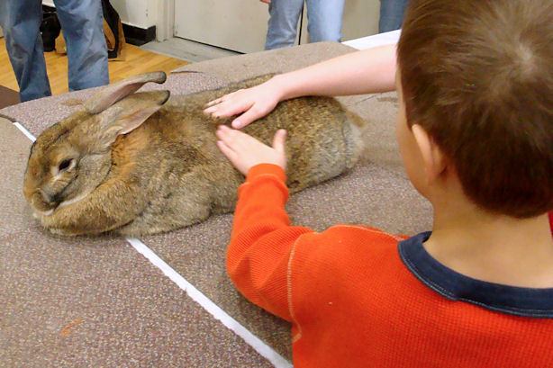 Winterfest 2011 - Z-Man Petting a Rabbit