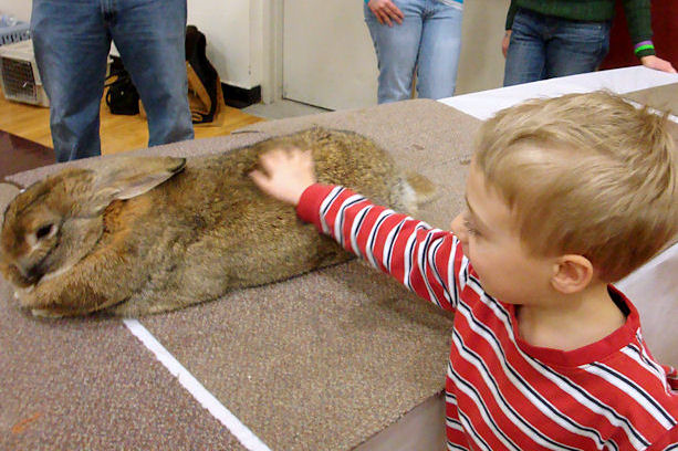 Winterfest 2011 - Little Guy Petting a Rabbit