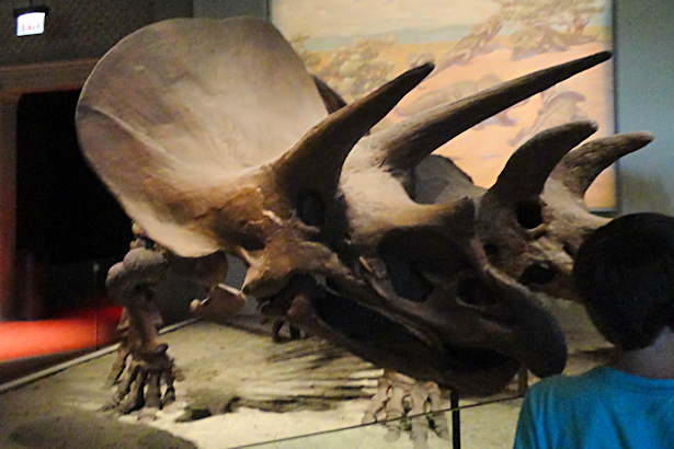 Chicago Part Four - Triceratops Fossils