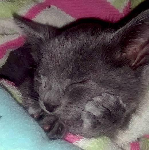 Kittens - Paco
