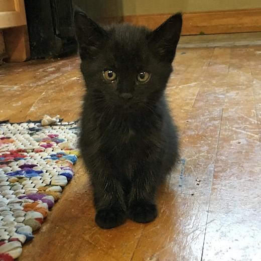 Kittens - Cinder