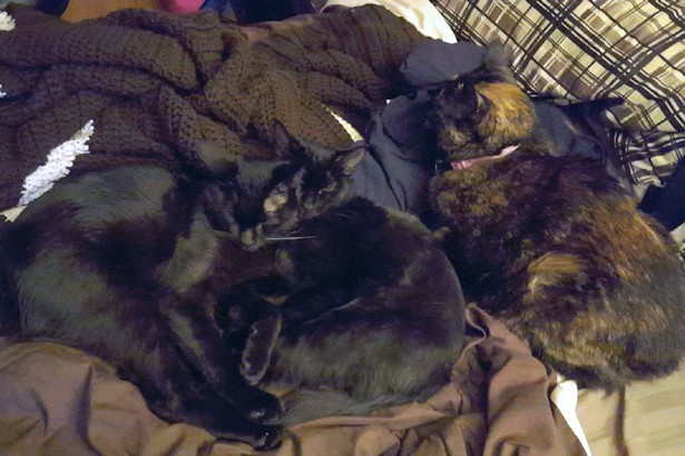 Kittens - Kittens and Laelia