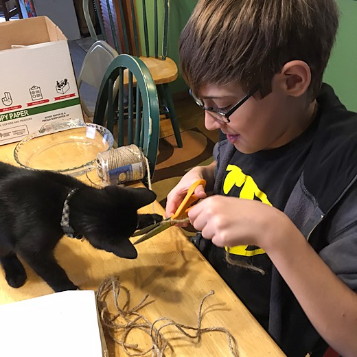 Kittens - Toothless and Z-Man