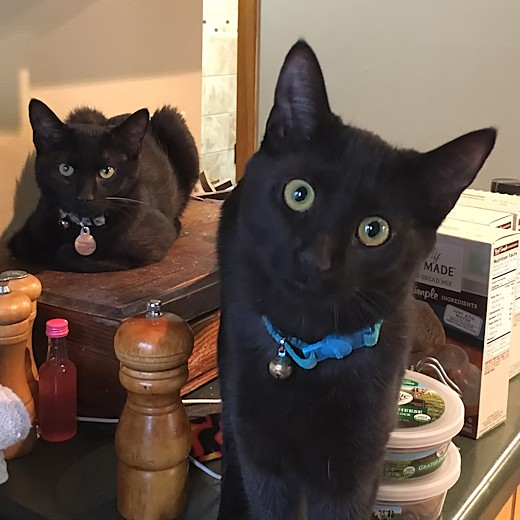 Kittens - Cinder and Toothless